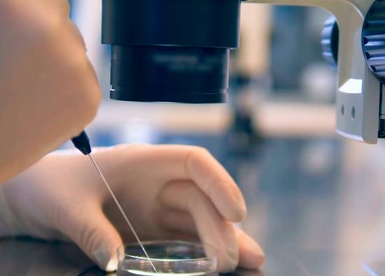 A Fertilização in vitro (FIV) é um dos procedimentos mais utilizados na reprodução humana assistida